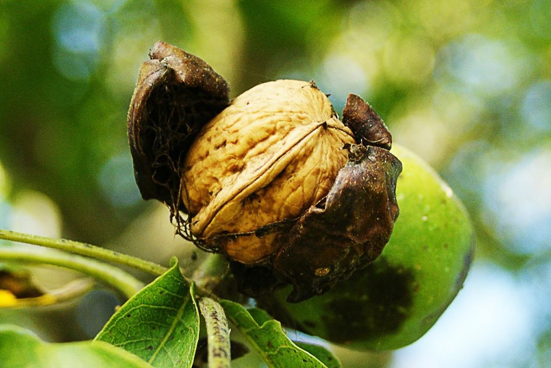 nuts-452150_1920.jpg